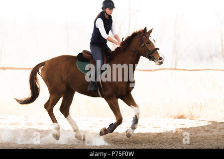 Young pretty girl - riding a horse in winter morning - Stock Photo