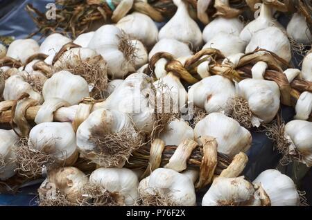 Garlic bulbs on food market in Catania, Sicily, fish market, site, vegetables, herbs, streets, Etna volcano, UNESCO, healthy food, medicinal - Stock Photo