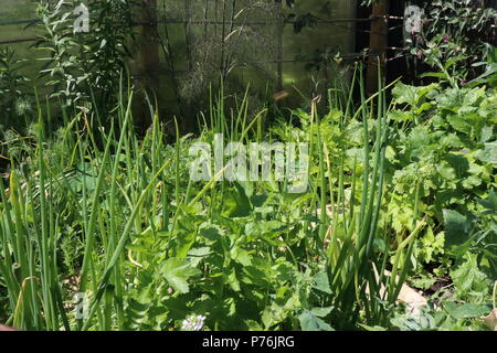 traditional vegetables grown using the square foot gardening method - Stock Photo