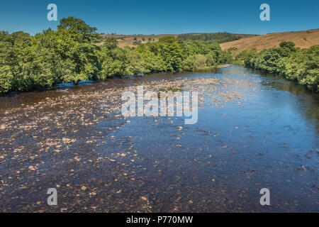 North Pennines landscape, the river Tees upstream from Beckstones Wath footbridge, Mickleton, Teesdale, UK in summer sunshine and a clear blue sky - Stock Photo