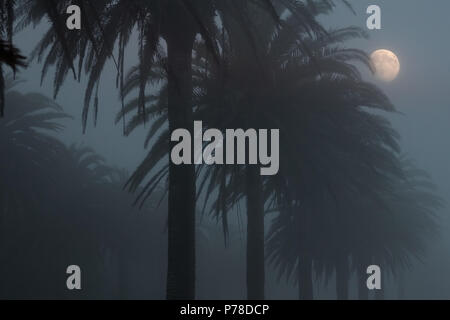 Rising moon over palm trees in a foggy dusk - Stock Photo