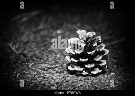 A lone fir cone sitting isolated on a piece of tarmac. - Stock Photo