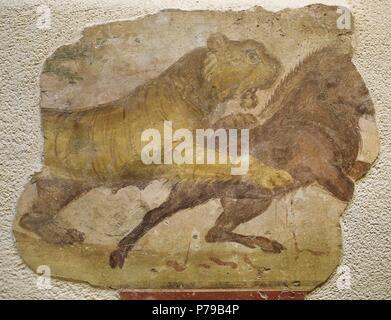 A tiger attacking a wild boar. Roman painting. Domus. 4th C. From Merida (Augusta Emerita). National Museum of Roman art. Merida. Spain. - Stock Photo