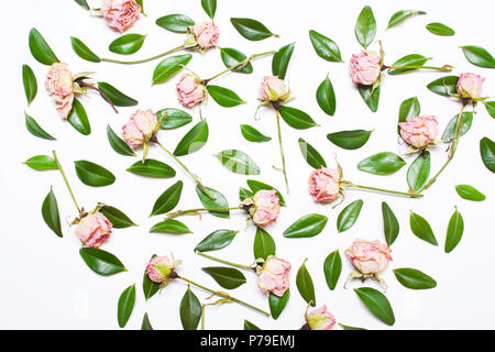 The pattern, composition of green leaves and pink flowers, roses on a white background. Top view - Stock Photo