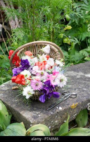 Lathyrus odoratus. Sweet pea 'Early Mammoth mixed', 'Antique Fantasy mixed' and Nigella damascena flowers. - Stock Photo