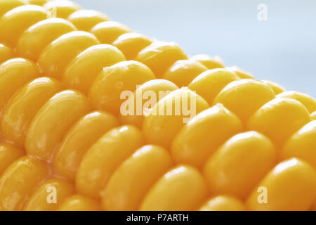 Close-up on oiled corn on the cob on neutral background - Stock Photo