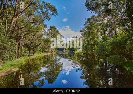 A river in the autumn near Coffs Harbour with Gum trees on both sides with blue sky and clouds reflecting in the water, New South Wales, Australia - Stock Photo