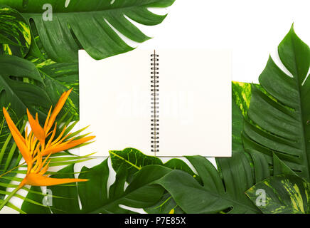 Still life photo tropical concept with border of monstera vine l - Stock Photo