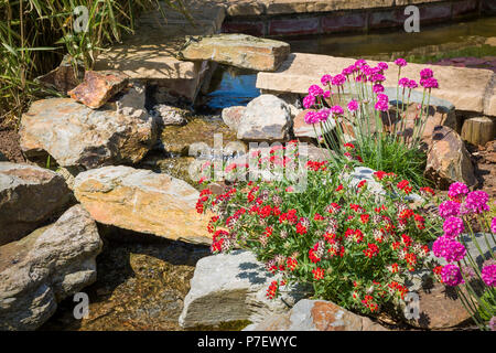 An English rock garden with waterfall and flowering plants including pink armeria in May - Stock Photo