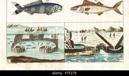 Mackerel fishing methods: walled channels and grate to catch spawning mackerel with the tide 47a, and fishermen in boats unfurling nets to encircle a school of mackered 47b. Painted mackerel, Scomberomorus regalis 48, and pilot fish, Naucrates ductor 49. Handcolored copperplate engraving after Jacob Nilson from Gottlieb Tobias Wilhelm's Encyclopedia of Natural History: Fish, Augsburg, 1804. Wilhelm (1758-1811) was a Bavarian clergyman and naturalist known as the German Buffon. - Stock Photo