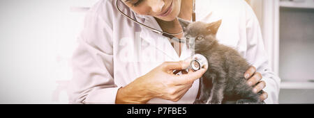 Vet examining kitten with stethoscope - Stock Photo