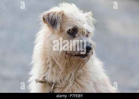 Portrait of old sad watch dog. - Stock Photo