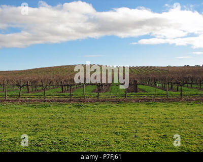 Winter vines growing in the Barossa Valley, South Australia. The wine industry plays a major role in the Barossa being the main source of employment - Stock Photo