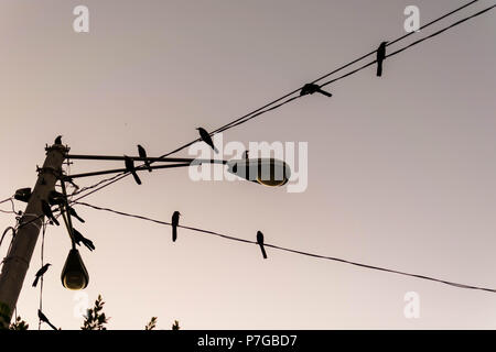 Black and white picture of a power line with pigeons on it in Granada, Nicaragua