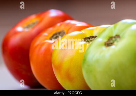Tomatoes at different ripening stages. Concept. Focus is on Turning tomato. Stages are Green then Turning then Light Red then Red. - Stock Photo