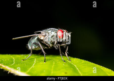 A green fly rests on a leaf. - Stock Photo