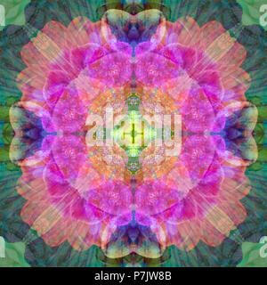 Photographic flower mandala, pink, yellow, green, purple, - Stock Photo