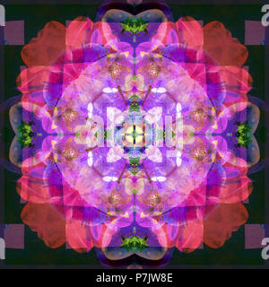 Photographic flower mandala, purple, pink, dark green, - Stock Photo