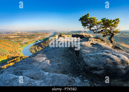 Germany, Saxony, Saxon Switzerland National Park, Elbe Sandstone Mountains / Elbe Sandstone Highlands, view from the Lilienstein to the Elbe, mountain pine on sandstone rocks, Elbe Valley - Stock Photo