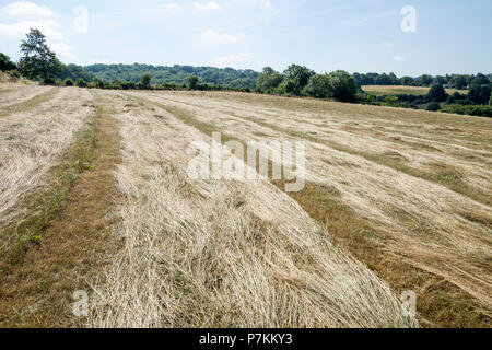 Bath, UK, 7th July, 2018.  As Bath enjoys another very hot and sunny day the dried and browning grass in Bathwick Meadow is pictured. Credit: lynchpics/Alamy Live News - Stock Photo