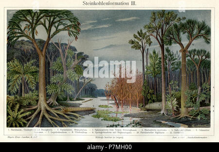 Landscape of the coalcorn time. 1. Fern tree, Caulopteris with pecopteria. 2. fern trunk, megaphyton. 3. Sphenopteris of the Hoeninghausi type. 4. Mariopteris muricala.5. Sphivnophyllum. 6. Calamites ramosus. 7. Lepidodendron. 8. Ulodendron. 9. Syringodendron with stigmariopsis. 10. Favular Sigularia.11. Cordaites., H Eichhorn - Stock Photo