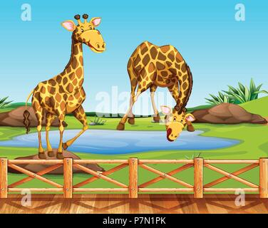 Two giraffes in a zoo illustration - Stock Photo