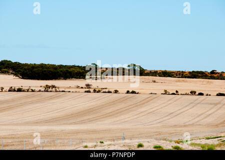 Harvested Wheat Fields - Australia - Stock Photo