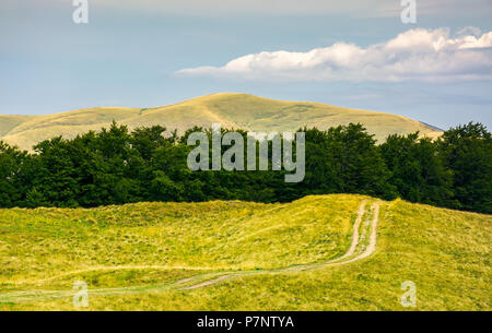 dirt road uphill in to the beech forest. beautiful mountainous landscape in summer. location Svydovets mountain ridge - Stock Photo