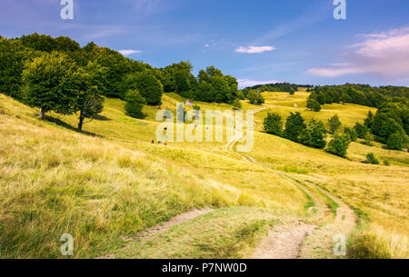 dirt road uphill through grassy rolling hills. beautiful mountainous landscape with beech forest in summer. cow cattle and woodshed in the distance. l - Stock Photo