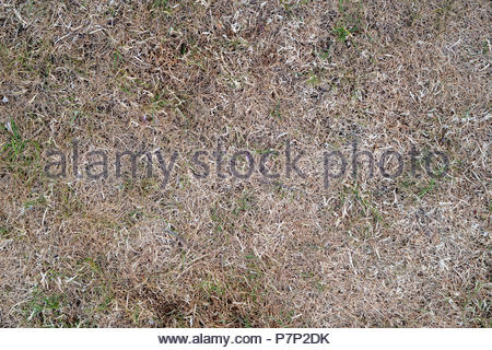 Dry brown parched grass in a summer heatwave due to the lack of rain. UK - Stock Photo