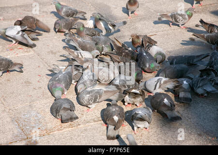 Pigeons feeding for scraps, Piazza San Marco, Venice, Italy - Stock Photo