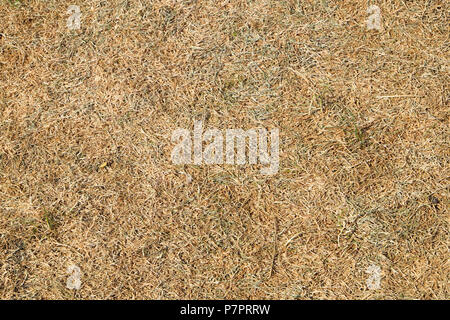 Close-up overhead view of dead grass on parched lawn in a garden in the 2018 heatwave in Wales, Great Britain UK - Stock Photo