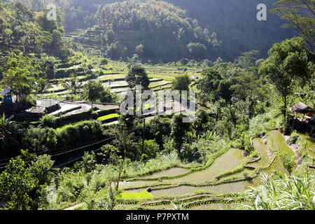Amed, Indonesia – July 2 2018: Rice fields near to the town of Amed, in the east of the island of Bali. - Stock Photo