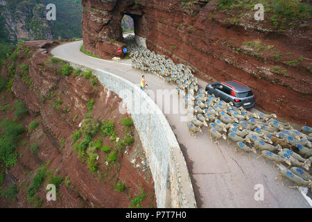 TRANSHUMANCE IN THE DALUIS GORGE ON THE WAY TO SUMMER PASTURES (aerial view from a 6-meter mast). Guillaumes, French Riviera's hinterland, France. - Stock Photo