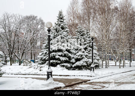 Cold January snow covered grove of young firs and birches in the city park - Stock Photo