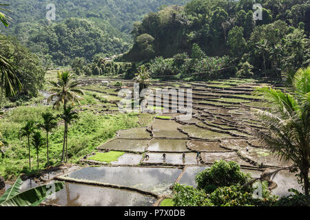 Water-filled rice terraces at planting time, near Detusoko, East Nusa Tenggara, Indonesia - Stock Photo