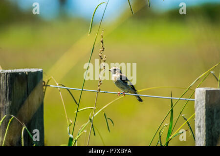 Little bird sits on wire fence in meadow - Stock Photo