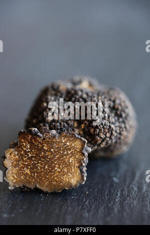 Fresh Black Summer Truffles, the diamond of the kitchen. Stock Photo
