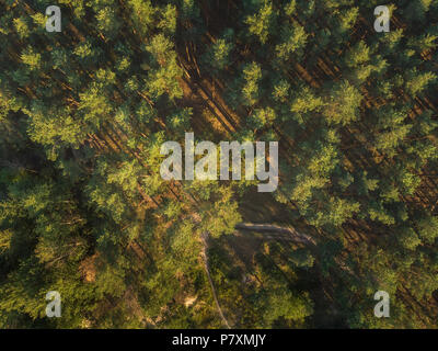 The road in the pine forest - view from the drone - Stock Photo