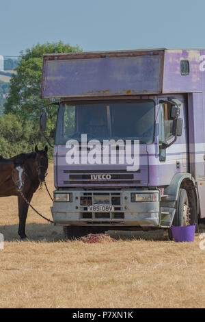 a horse transport lorry with a horse standing at the side. - Stock Photo
