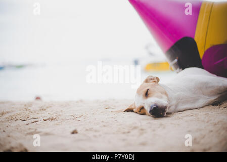Sleeping dog on the beach near the banana boat. Animal and and Vacation in holiday concept. - Stock Photo