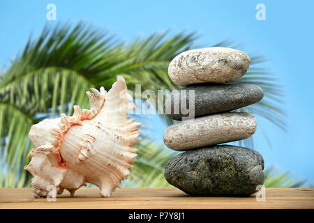 close up shot of stone pile and seashell - Stock Photo