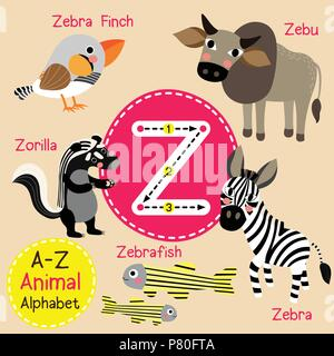 Cute children zoo alphabet Z letter tracing of funny animal cartoon for kids learning English vocabulary
