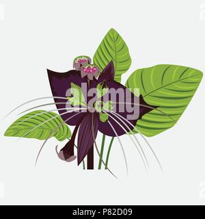 black flower of devil with leaves - Stock Photo