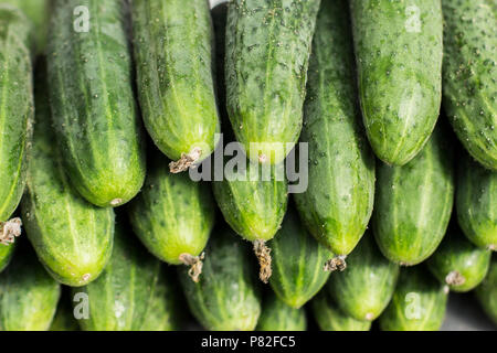 fresh cucumber abstract fruit colorful pattern texture background - Stock Photo