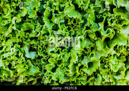 fresh green salad abstract fruit colorful pattern texture background - Stock Photo