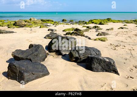 Black volcanic rocks and moss-covered stones on the white sandy beach of Costa Calma, Fuerteventura, Canary Islands, Spain - Stock Photo