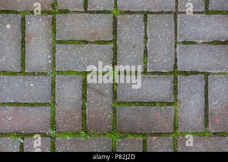 concrete tile on the ground pavement path abstract pattern texture background with grass - Stock Photo