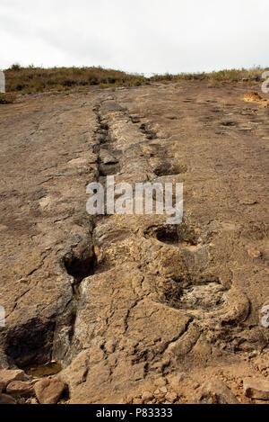 Dinosaur: Sauropod footprints in Torotoro National Park, Bolivia. Jun 2018 - Stock Photo