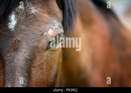 Portrait of beautiful red horse in summer - Stock Photo